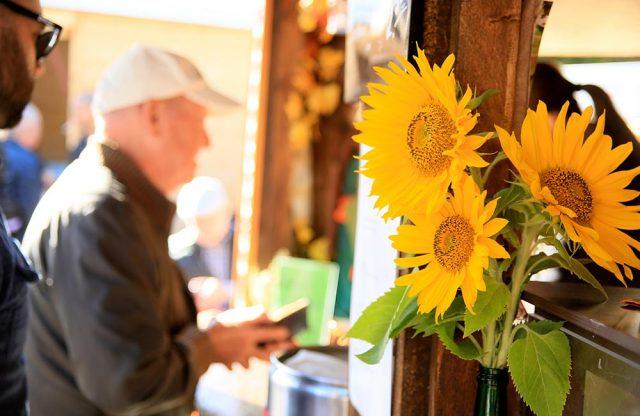 Sonnenblume Stand